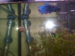 do you need a heater in a tropical fish tank aquariums at home