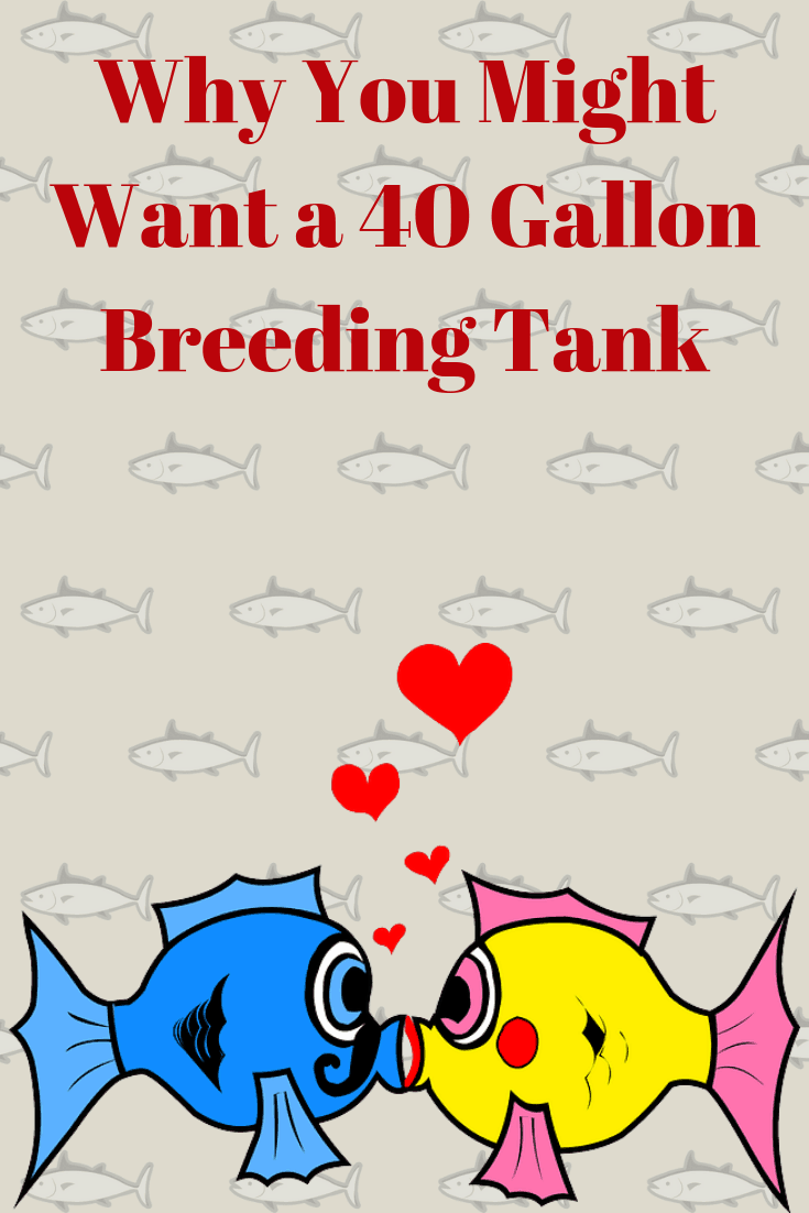 What is a 40 Gallon Breeder Tank and why you might want one