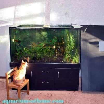 fish tank with lid off